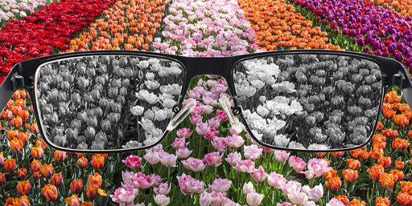 色弱 花畑 眼鏡